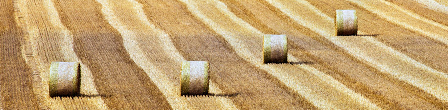 Rolled hay in the agricultural fields, France, Europe