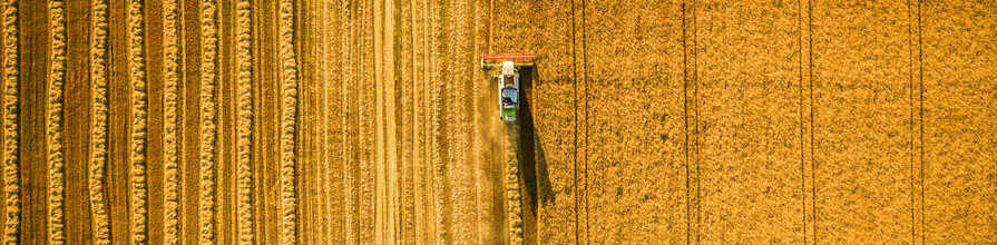 Harvester working on a large golden wheat field. Centre for Food Policy research global food policy.