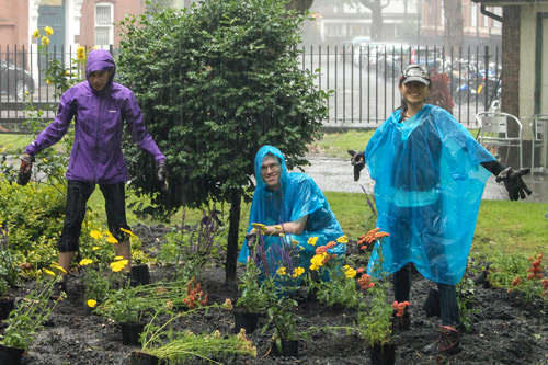 Students in the rain Gardening in Northampton Square