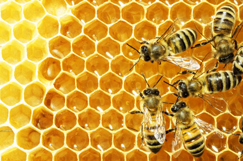 Red light could save bees from pesticide poisoning
