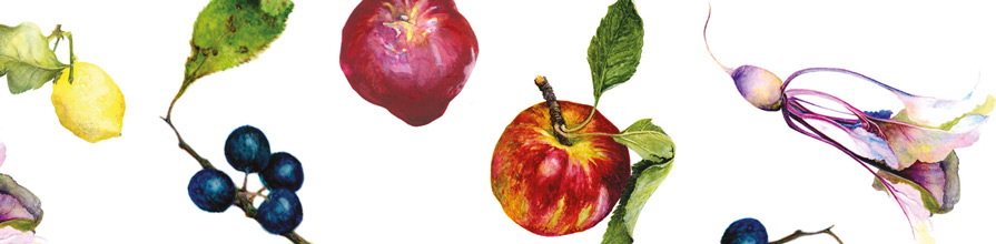 Apple, blueberry, lemon and other fruit illustrations from the sustainable diets book cover.