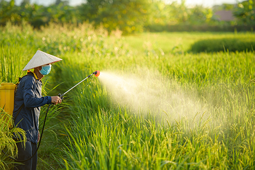 Chinese farmer sprays pesticide on crops