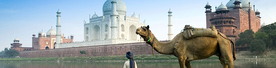 A dromedary and its owner in front of the Taj Mahal