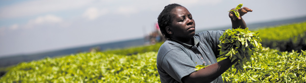 Rahel Mhabuka, tea worker at Kibena Tea Estate, Tanzania