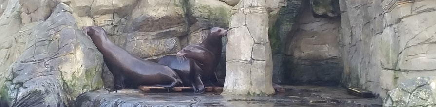 Three seals sit on rocks